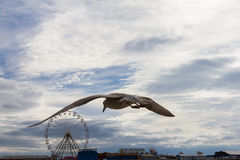 Flying seagull against the sky and Blackpool Central Pier, UK Royalty Free Stock Photography