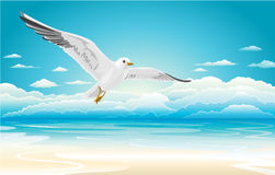 Flying seagull on Beach Stock Photo