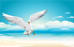 Flying seagull on Beach Royalty Free Stock Photography