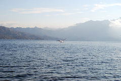 Flying seagull. Gull flying over the sea royalty free stock photography