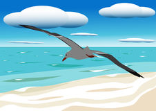 A flying seagull. Hovers over blue sea Stock Images