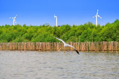 A flying seagull hovers over sea near by mangrove forest and line of wind turbines Royalty Free Stock Images