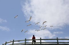 Flying seagull. 2014.4.23 Looking up the sky Stock Photos