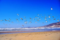 Flying seagull. Many seagulls flying in the seaside Royalty Free Stock Photography