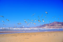 Flying seagull. Many seagulls flying in the seaside Royalty Free Stock Image