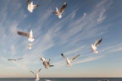 Flying Seagull over black sea Stock Photos