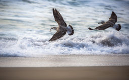 Flying seagull over the blue sea Stock Image