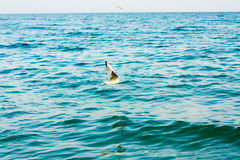 Flying seagull over blue water background Stock Photos