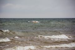 Flying seagull over the sea. Stock Photos