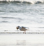 Flying seagull over the sea stock photography