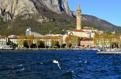 Flying seagull and panoramic view to Lecco centre at lake Como. Stock Photo