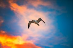 Flying seagull in sky with clouds Royalty Free Stock Photography