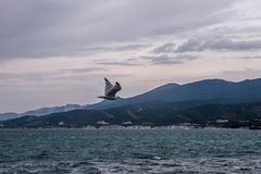 Flying seagull. In the sky over the sea Royalty Free Stock Photos