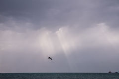 Flying seagull. In the sky over the sea Stock Image