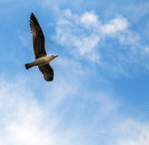 Flying seagull in sky Stock Photo