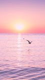Flying Seagull at sunrise on sea on the background of a peaceful sea and rising sun. Flying Seagull at sunrise on sea on the background of a sea and rising sun Stock Photo