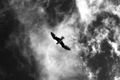 Flying seagull in the sky. Royalty Free Stock Photography