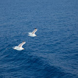 Flying seagulls. Over blue water background Royalty Free Stock Image