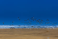 Flying seagulls. On the beach at the ocean waves Royalty Free Stock Images