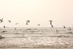 Flying seagulls at the beach Stock Photos