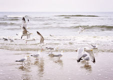 Flying seagulls at the beach Stock Image