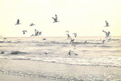 Flying seagulls at the beach. Sundown or time after the sunset with open sea and flying gulls. Tranquil scene. Toned image Royalty Free Stock Photos