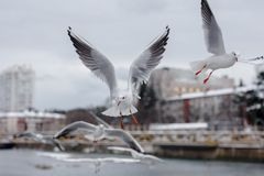 Flying seagulls at city background Stock Photo