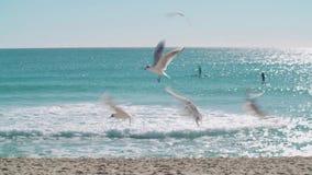 Flying seagulls. Sea ocean water stock video footage