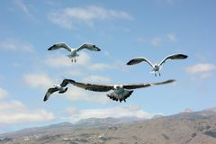 Flying seagulls and mountain view stock photos