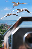 Flying seagulls over coastal landscape Royalty Free Stock Images