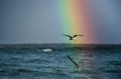 Flying seagulls over the ocean with rainbow backgrounds Royalty Free Stock Photography