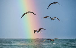 Flying seagulls over the ocean, rainbow backgrounds Royalty Free Stock Photography