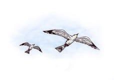 Flying Seagulls (Zen Pictures II, 2012) Royalty Free Stock Image