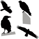 Flying and sitting crow. Set of  silhouettes Stock Photo