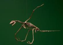 Flying skeleton Royalty Free Stock Image