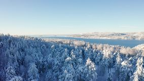 Flying slow towards a fjord above epic snowy cold winter forest stock video footage