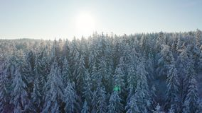 Flying slow towards the sun above epic snowy forest in cold winter landscape stock video footage