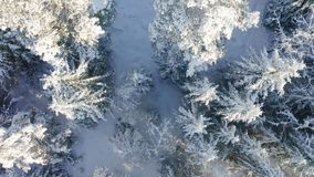 Flying slowly directly above large forest in the cold winter stock video footage