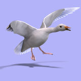 Flying snow goose. 3D rendering of a flying snow goose with clipping path and shadow over white Stock Image