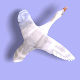 Flying snow goose. 3D rendering of a flying snow goose with clipping path and shadow over white Royalty Free Stock Photos