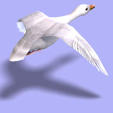 Flying snow goose. 3D rendering of a flying snow goose with clipping path and shadow over white Stock Photos