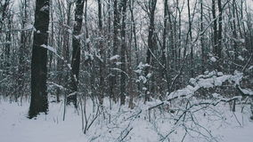 Flying through the snowy forest stock video footage