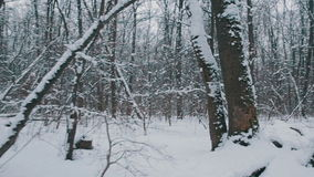Flying through the snowy forest stock footage