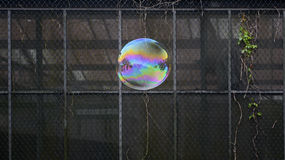Flying soap bubble. Soap bubble with reflections of different shades stock photo