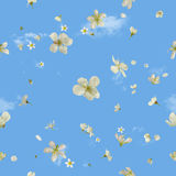 Flying Spring Blossoms on Sky. Seamless flying white pear blossoms, studio photographed, in depth of field, isolated on absolute blue, with wispy clouds behind Royalty Free Stock Photography