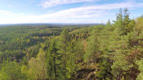 Flying between spruce trees and above large forest. Camera flying between spruce trees and over a large forest in the autumn. Stabilized video footage stock footage