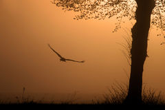 Flying Stork Stock Photography