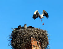 Flying stork Royalty Free Stock Images