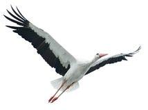 Flying stork. Isolated on white background Stock Photos