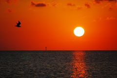 Flying into the Sunset. Seagull flying past the setting sun in South Padre Island, Texas Royalty Free Stock Photography